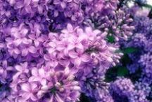 floral / vintage