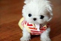 Cute / Animals and puppies that are too cute for words!