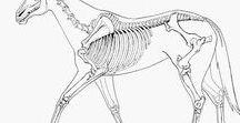 Anatomy (animals)