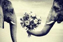Eläinystäviä