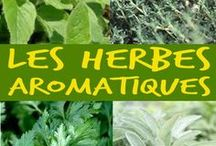 Herbes et aromates / Mieux connaître les principales herbes aromatiques de son potager pour les associer au bon plat ...