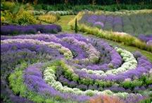 Garten ❦