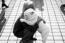 """An Animals Love is Unconditional / """"Until one has loved an animal, a part of one's soul remains unawakened."""""""