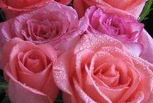 Rosas, las mas bellas / BELLAS PLANTAS