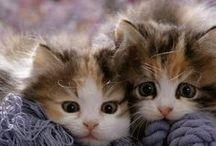 Pequeños Gatos / gatos que me gustan