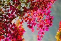 paisajes de otoño / PRECIOSOS PAISAJES EN LA PRECIOSA ESTACIÓN DE OTOÑO