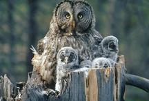 Owls.....lechuzas y buhos. / by Adriana Mendez