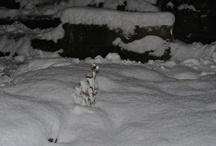 snowyyyy