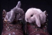 animals-mammals-bunnies and hares / by Laura Lee