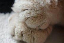 Kitties! / Anything Cat / by Susan Brunjes