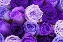 purple.........