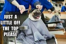 Groomer humor / by Gotta B Country