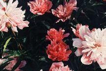Atmosphere // Floral / Fields