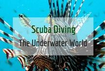 Scuba Diving / The underwater world is fascinating, beautiful and so colourful!