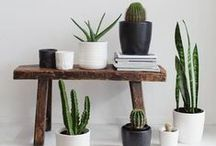plants for home