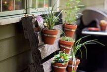 Puutarhailua / Gardening