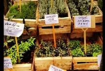 Marché 100% Provence / Le marché a lieu le mercredi matin jusqu'à 13h, dans les petites rues du centre ancien. Faites le plein de couleurs et de saveurs provençales ! Traditional provençal market is on Wednesdays until 1pm in town centre's small streets. Enjoy Provence's colours and tastes !
