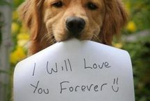 I Love Goldens / The best friend