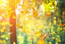 Autumn..the year's last, loveliest smile ;)