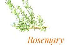 """Rosemary camphor / Camphor rosemary is a shrub of the Lamiaceae family native to the Mediterranean area. It is one of the """"herbes de Provence"""".  Rosemary grows wild on the Mediterranean coast; it is one of the most extensively cultivated plants in France. In Corsica, where it is abundant (hence its designation Corsican blue), its intense blue flowers and multiple virtues have led to its being nicknamed a man di Diu (the hand of God). It is also produced in Tunisia, Morocco, Italy and Spain."""