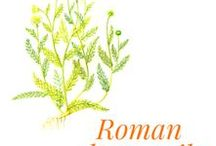 Roman chamomile / It belongs to the Asteraceae family and grows almost everywhere in Europe, with a preference for silica rich soils. Roman chamomile is widely spread in temperate European regions, and in particular in France. It does not grow at high altitudes and prefers silica containing soils. These are quite common in Anjou, and it is in this region that the most sought after quality is cultivated.