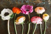 Beautiful ! Flowers / by La ! Dorá