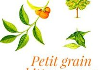 """Petit grain bitter orange / Native to Asia, the bitter orange tree is a member of the Rutaceae family, with spiny branches and alternate, persistent and coriaceous brilliant green leaves. The """"bitter"""" orange tree, introduced into Spain by the Arabs in the 9th century, also referred to as the """"Seville orange tree"""", is cultivated in many countries, including India, China and Paraguay. It is mainly used in the perfume industry, where it is a constituent of eau de Cologne."""