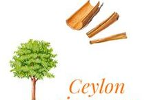 Ceylon cinnamon / Native of Sri Lanka, it is a member of the Laureaceae family, the tree was only cultivated from the 13th century onwards. Only Sri Lanka and Madagascar produce Cinnamomum zeylanicum or Cinnamomum verum.