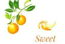 """Sweet orange / The orange tree is a fruit tree of the Rutaceae family native to Asia. It is the result of a natural hybridisation between grapefruit and mandarin. Orange trees are cultivated in hot regions such as the Mediterranean area, the Maghreb, China, South Africa and Australia. Introduced into California and Florida, the intensive production of the """"Washington navel"""" species, developed in Brazil, has flooded the market. Brazil is by far the first orange juice exporter."""