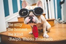 #Took loves Emerson / #Took the insurance dog quoting Emerson. Www.jengregorski.com