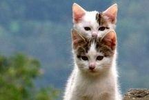 kissejä