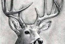 Animals / Sketches Animals