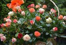 Flowers my love <3