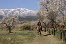 Coupony op ruitervakantie / Overal ter wereld zijn leuke en avontuurlijke paardenvakanties te vinden!