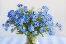 Forget Me Not ...