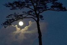 Pale Light of Silver Moon