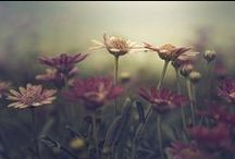 Wildflowers Meadow
