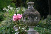 Rose for Arneken
