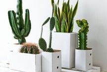 [RE] plant / Look to this board for inspiration on indoor plants that bring life to your living space.