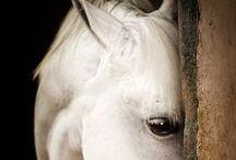 """╰☆╮Mitakuye Oyasin╰☆╮ """" All Are Related"""" """"siamo tutti fratelli"""" Native American /  ❤ Horses, wolves and Native Americans ❤ """"Do not judge your neighbor until you walk two moons in his moccasins."""" ~ Cheyenne~  Non giudicare il tuo vicino finché non avrai camminato per due lune nelle sue scarpe. ~Cheyenne~"""
