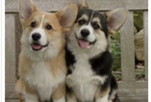 Corgis / by Mary Frances Mays Hicks