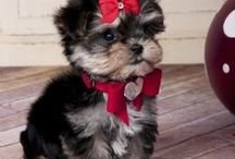 Pawsitively Adorable / by Tammy Dodge