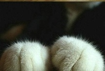 Animals / by Sarah Parenteau