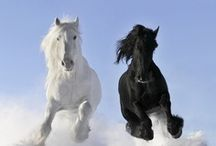 Horses / by Jody Thibodeaux-Bowman