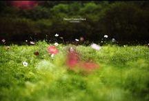 0*Life-is-beautiful / ~shape of love & wonferfully nature~