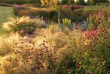 Ornamental grasses, perennials and shrubs / Most beautiful plant combinations off mostly grasses and perennials.