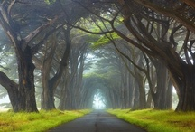 Most beautiful pictures from nature trees