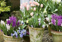 Garden and Flora