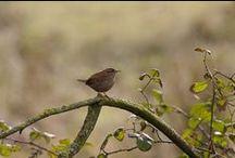 Birds / Gorgeous creatures