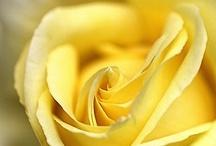 Flowers / by Emily McIndoe